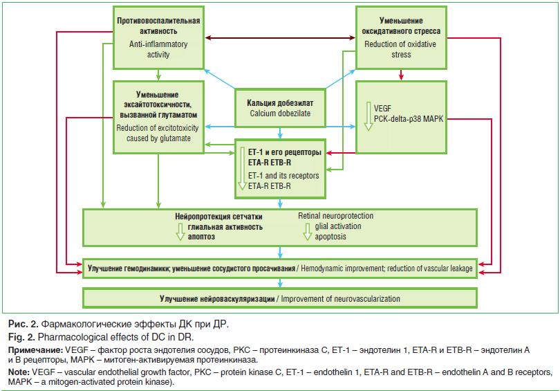 Рис. 2. Фармакологические эффекты ДК при ДР.
