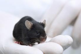 Исследователи придумали, как остановить развитие атеросклероза