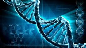 Ученые обнаружили 40 генов, отвечающих за агрессивное поведение