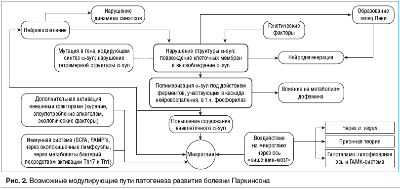 Рис. 2. Возможные модулирующие пути патогенеза развития болезни Паркинсона