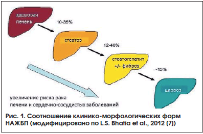 Рис. 1. Соотношение клинико-морфологических форм НАЖБП (модифицировано по L.S. Bhatia et al., 2012 [7])
