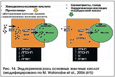 Рис. 14. Эндокринная роль основных желчных кислот (модифицировано по M. Watanabe et al., 2006 [61])