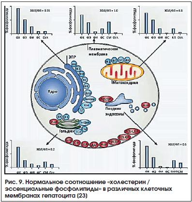 Рис. 9. Нормальное соотношение «холестерин / эссенциальные фосфолипиды» в различных клеточных мембранах гепатоцита [23]