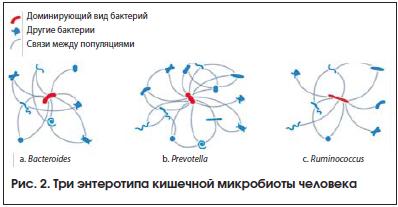 Рис. 2. Три энтеротипа кишечной микробиоты человека
