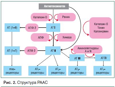 Рис. 2. Структура РААС