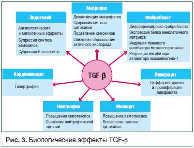 Рис. 3. Биологические эффекты TGF-β
