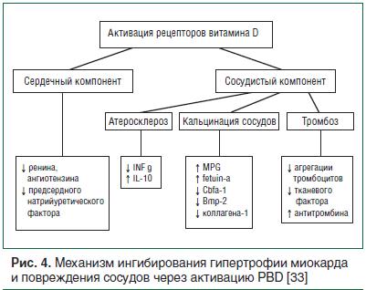 Рис. 4. Механизм ингибирования гипертрофии миокарда и повреждения сосудов через активацию PBD [33]