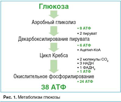 Рис. 1. Метаболизм глюкозы