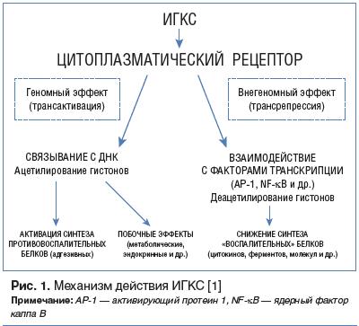 Рис. 1. Механизм действия ИГКС [1]
