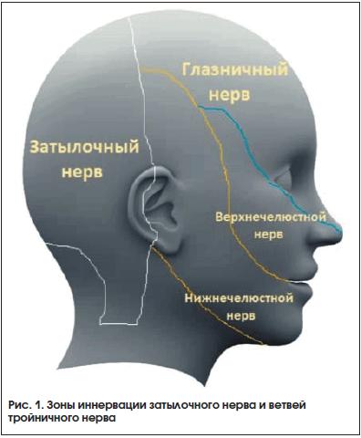 Рис. 1. Зоны иннервации затылочного нерва и ветвей тройничного нерва