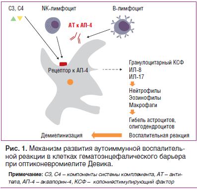 Рис. 1. Механизм развития аутоиммунной воспалительной реакции в клетках гематоэнцефалического барьера при оптиконевромиелите Девика.
