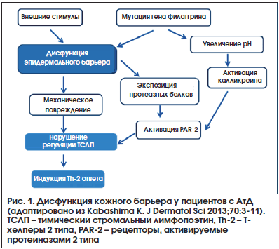 Рис. 1. Дисфункция кожного барьера у пациентов с АтД (адаптировано из Kabashima K. J Dermatol Sci 2013;70:3-11). ТСЛП – тимический стромальный лимфопоэтин, Th-2 – Т- хелперы 2 типа, PAR-2 – рецепторы, активируемые протеиназами 2 типа