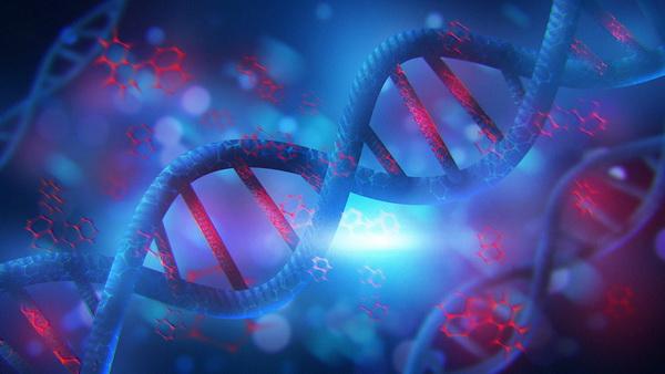 полиморфизм гена ELMO1
