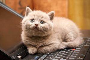 Кошачий паразит может реально свести с ума человека
