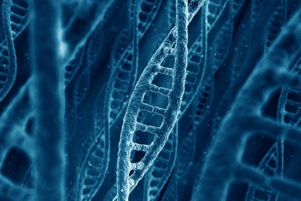Культура обходит генетику как движущая сила человеческой эволюции, утверждают ученые