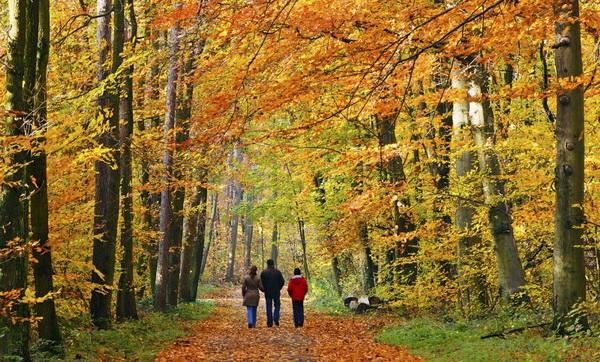 Даже короткая прогулка укрепляет память