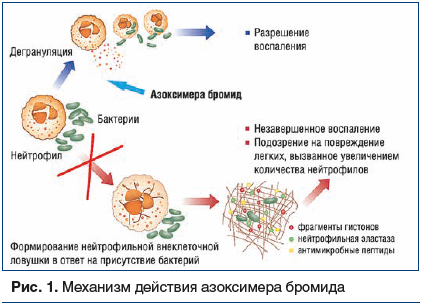 Рис. 1. Механизм действия азоксимера бромида