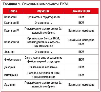 Таблица 1. Основные компоненты ВКМ