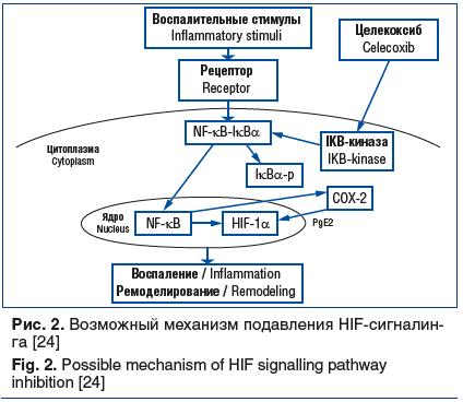 Рис. 2. Возможный механизм подавления HIF-сигналин- га [24] Fig. 2. Possible mechanism of HIF signalling pathway inhibition [24]