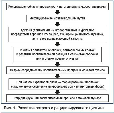 Рис. 1. Развитие острого и рецидивирующего цистита