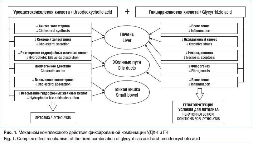Рис. 1. Механизм комплексного действия фиксированной комбинации УДХК и ГК Fig. 1. Complex effect mechanism of the fixed combination of glycyrrhizic acid and ursodeoxycholic acid