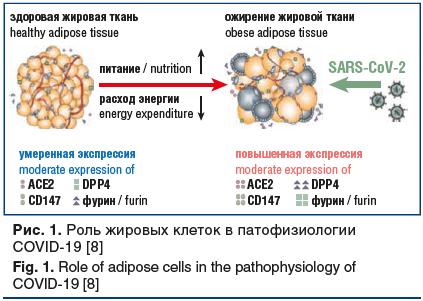 Рис. 1. Роль жировых клеток в патофизиологии COVID-19 [8] Fig. 1. Role of adipose cells in the pathophysiology of COVID-19 [8]