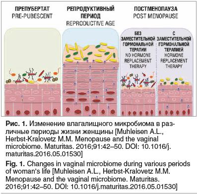 Рис. 1. Изменение влагалищного микробиома в раз- личные периоды жизни женщины [Muhleisen A.L., Herbst-Kralovetz M.M. Menopause and the vaginal microbiome. Maturitas. 2016;91:42–50. DOI: 10.1016/j. maturitas.2016.05.01530] Fig. 1. Changes in vaginal microb