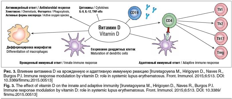 Рис. 3. Влияние витамина D на врожденную и адаптивную иммунную реакцию [Iruretagoyena M., Hirigoyen D., Naves R., Burgos P.I. Immune response modulation by vitamin D: role in systemic lupus erythematosus. Front. Immunol. 2015;6:513. DOI: 10.3389/fimmu.201