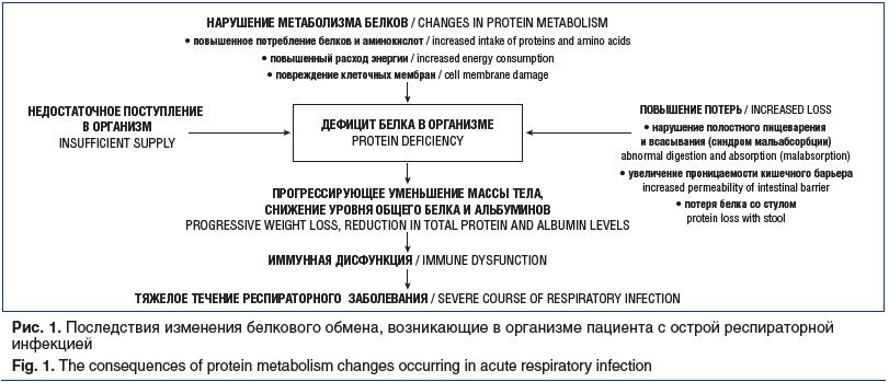 Рис. 1. Последствия изменения белкового обмена, возникающие в организме пациента с острой респираторной инфекцией Fig. 1. The consequences of protein metabolism changes occurring in acute respiratory infection