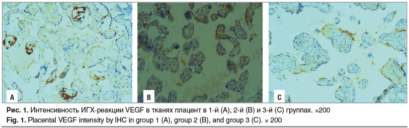 Рис. 1. Интенсивность ИГХ-реакции VEGF в тканях плацент в 1-й (А), 2-й (B) и 3-й (C) группах. ×200 Fig. 1. Placental VEGF intensity by IHC in group 1 (A), group 2 (B), and group 3 (C). × 200