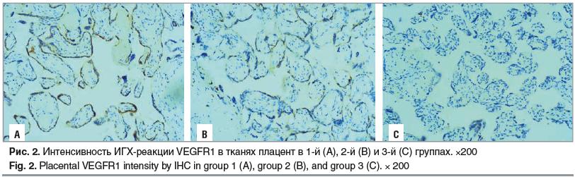 Рис. 2. Интенсивность ИГХ-реакции VEGFR1 в тканях плацент в 1-й (А), 2-й (B) и 3-й (C) группах. ×200 Fig. 2. Placental VEGFR1 intensity by IHC in group 1 (A), group 2 (B), and group 3 (C). × 200
