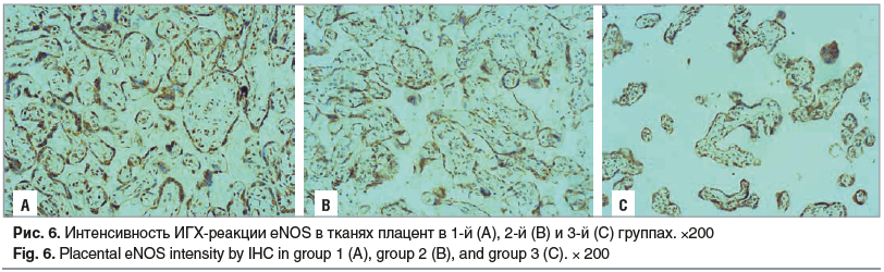 Рис. 6. Интенсивность ИГХ-реакции еNOS в тканях плацент в 1-й (А), 2-й (B) и 3-й (C) группах. ×200 Fig. 6. Placental eNOS intensity by IHC in group 1 (A), group 2 (B), and group 3 (C). × 200