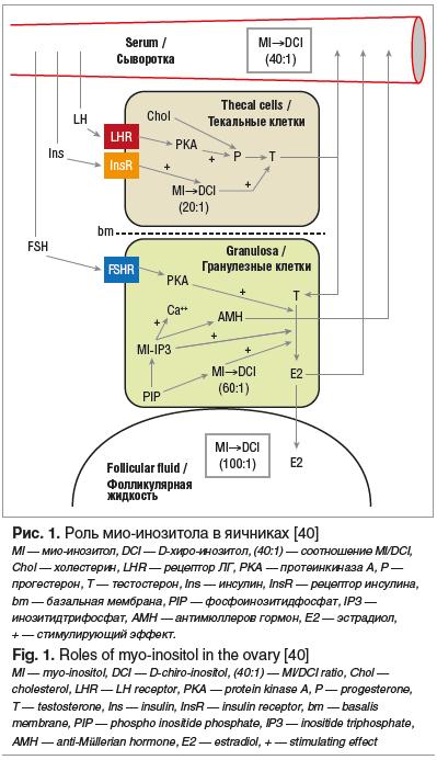 Рис. 1. Роль мио-инозитола в яичниках [40]