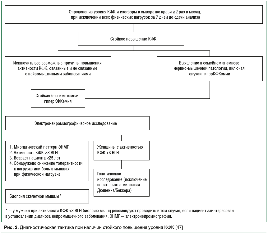 Рис. 2. Диагностическая тактика при наличии стойкого повышения уровня КФК [47]