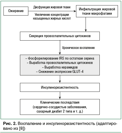 Рис. 2. Воспаление и инсулинорезистентность (адаптировано из [8])