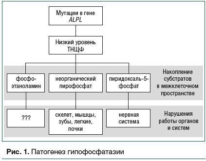 Рис. 1. Патогенез гипофосфатазии