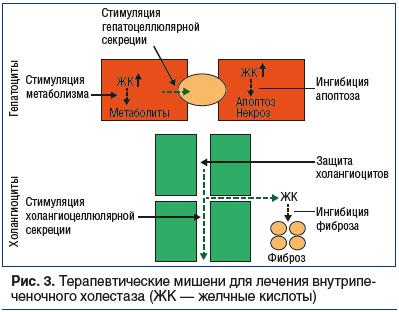 Рис. 3. Терапевтические мишени для лечения внутрипеченочного холестаза (ЖК — желчные кислоты)