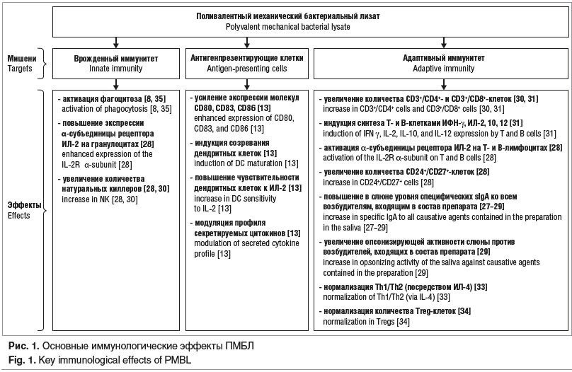 Рис. 1. Основные иммунологические эффекты ПМБЛ Fig. 1. Key immunological effects of PMBL