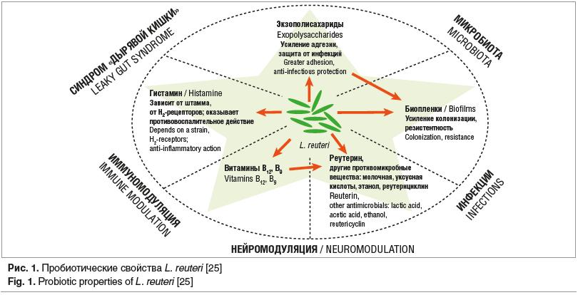 Рис. 1. Пробиотические свойства L. reuteri [25] Fig. 1. Probiotic properties of L. reuteri [25]
