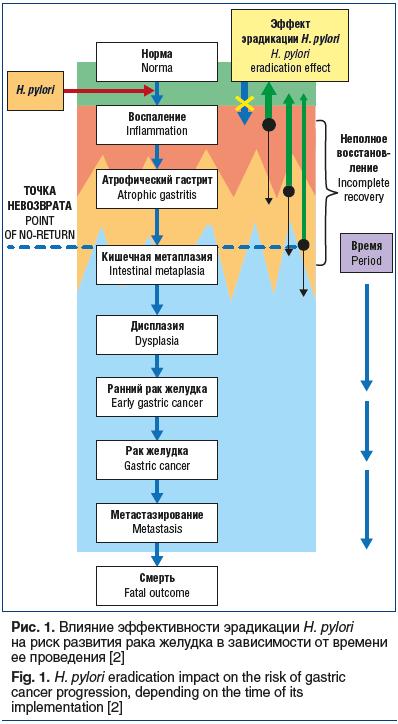 Рис. 1. Влияние эффективности эрадикации H. pylori на риск развития рака желудка в зависимости от времени ее проведения [2] Fig. 1. H. pylori eradication impact on the risk of gastric cancer progression, depending on the time of its implementation [2]